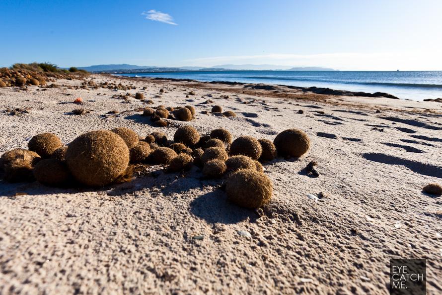 Fotos von Seegras Kugeln am Strand von Cagliari